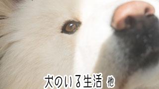 【わさお通信:特別増刊】犬のいる生活 他