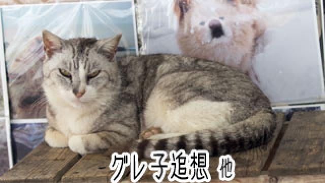 【わさお通信:特別増刊】 グレ子追想 他
