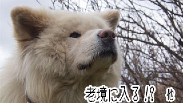 【わさお通信:特別増刊】 老境に入る!? 他