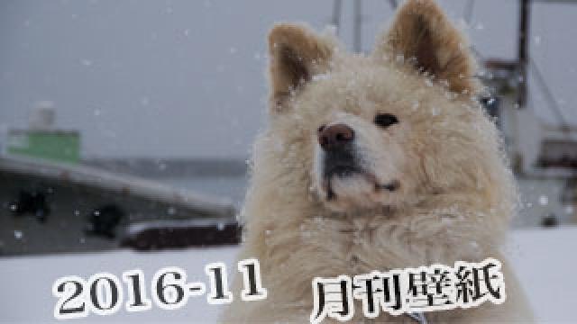 【わさお通信:特別増刊 2016-11】月刊わさお壁紙