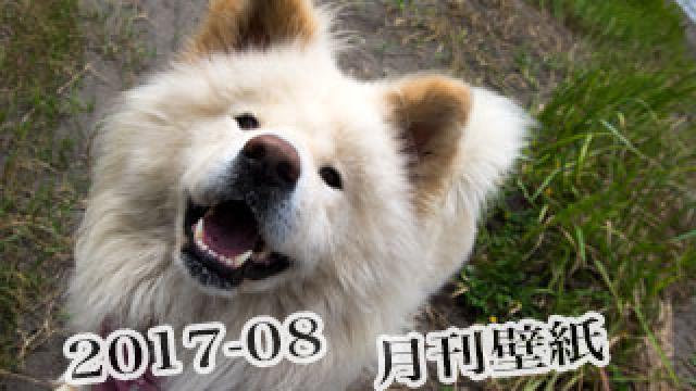 【わさお通信:特別増刊 2017-08】月刊わさお壁紙