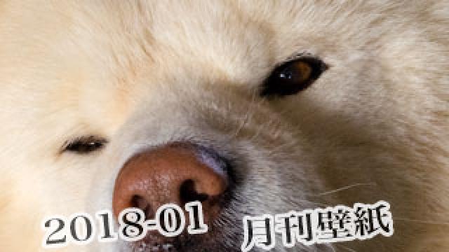 【わさお通信:特別増刊 2018-01】月刊わさお壁紙