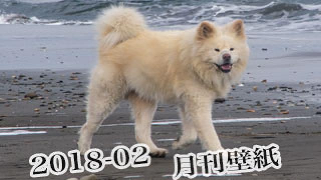 【わさお通信:特別増刊 2018-02】月刊わさお壁紙