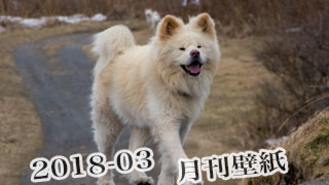【わさお通信:特別増刊 2018-03】月刊わさお壁紙