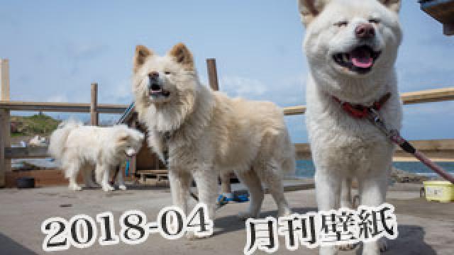 【わさお通信:特別増刊 2018-04】月刊わさお壁紙