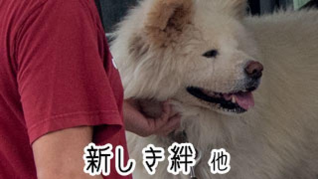 【わさお通信:特別増刊】 新しき絆 他