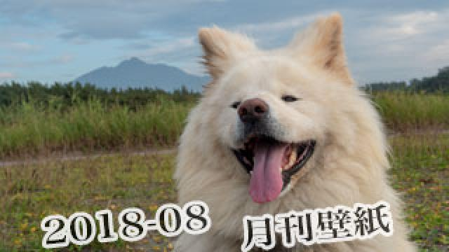 【わさお通信:特別増刊 2018-08】月刊わさお壁紙