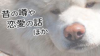 【わさお通信:特別増刊 2012-11】昔の噂や恋愛の話 他