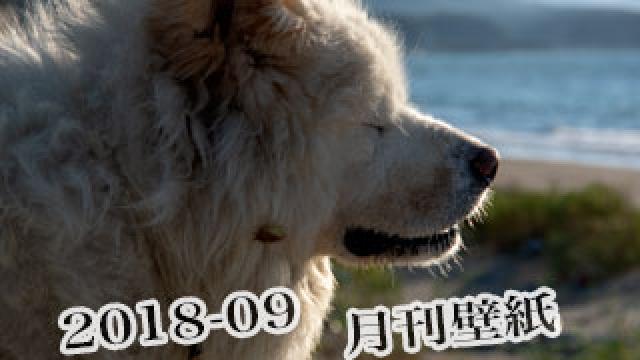 【わさお通信:特別増刊 2018-09】月刊わさお壁紙