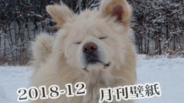 【わさお通信:特別増刊 2018-12】月刊わさお壁紙