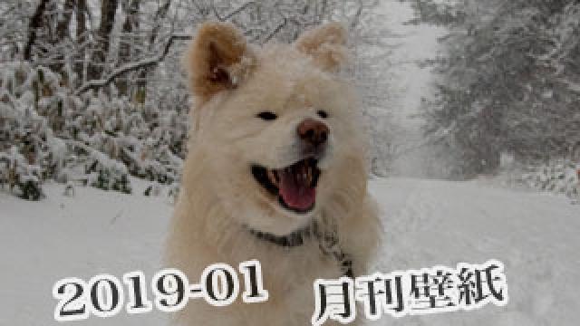 【わさお通信:特別増刊 2019-01】月刊わさお壁紙
