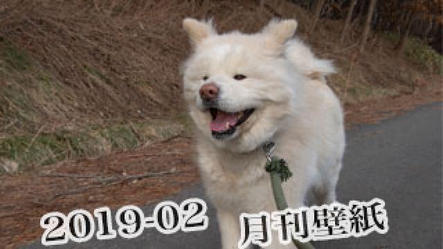 【わさお通信:特別増刊 2019-02】月刊わさお壁紙