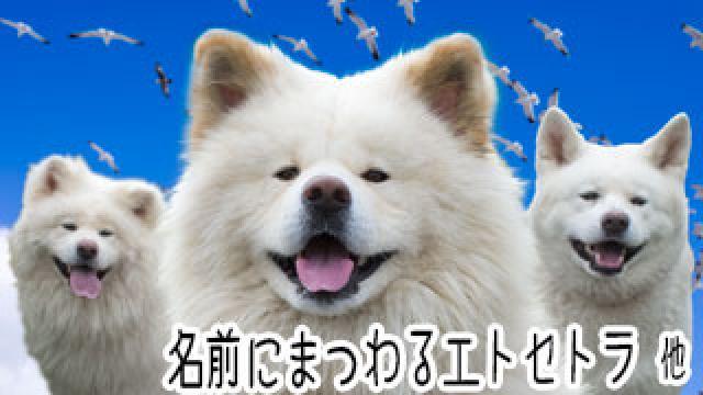 【わさお通信:特別増刊】 名前にまつわるエトセトラ 他