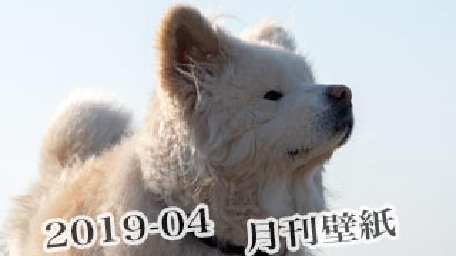 【わさお通信:特別増刊 2019-04】月刊わさお壁紙