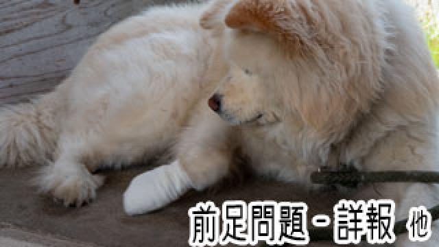 【わさお通信:特別増刊】前足問題-詳報 他
