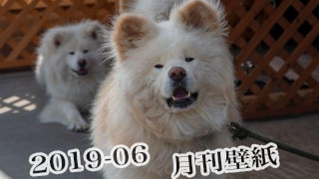 【わさお通信:特別増刊 2019-06】月刊わさお壁紙