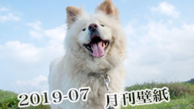 【わさお通信:特別増刊 2019-07】月刊わさお壁紙