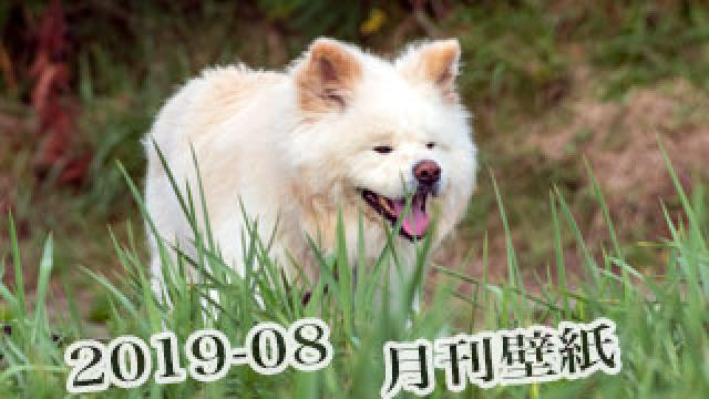 【わさお通信:特別増刊 2019-08】月刊わさお壁紙