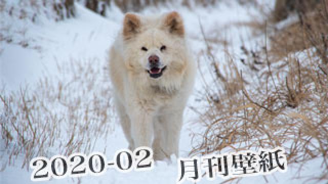 【わさお通信:特別増刊 2020-02】月刊わさお壁紙