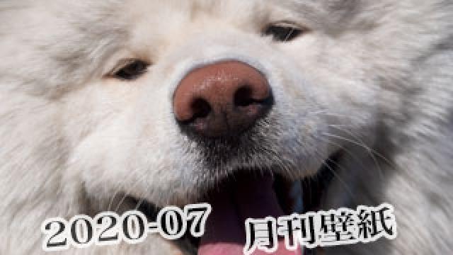 【わさお通信:特別増刊 2020-07】月刊わさお壁紙