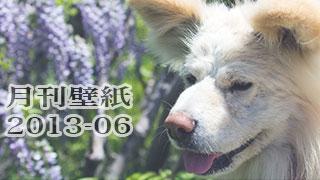 【わさお通信:特別増刊 2013-06】月刊わさお壁紙
