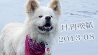 【わさお通信:特別増刊 2013-08】月刊わさお壁紙