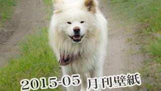 【わさお通信:特別増刊 2015-05】月刊わさお壁紙