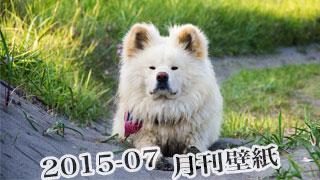 【わさお通信:特別増刊 2015-07】月刊わさお壁紙