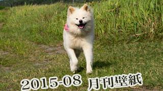 【わさお通信:特別増刊 2015-08】月刊わさお壁紙
