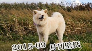 【わさお通信:特別増刊 2015-09】月刊わさお壁紙