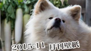 【わさお通信:特別増刊 2015-11】月刊わさお壁紙