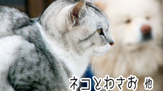 【わさお通信:特別増刊】ネコとわさお 他