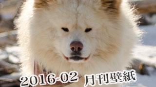 【わさお通信:特別増刊 2016-02】月刊わさお壁紙
