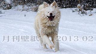 【わさお通信:特別増刊 2013-02】月刊わさお壁紙