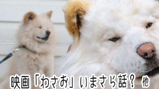 【わさお通信:特別増刊】映画「わさお」いまさら話? 他