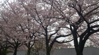 一流柔道家との交流■中井祐樹の「東奔西走日記」4月1日〜14日編