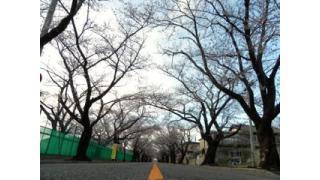Vol.083 福島県富岡町「夜の森の桜」の今