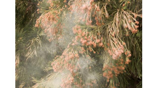 花粉症は公害である 直ちに杉の木を伐採し解決するように都と国に求める