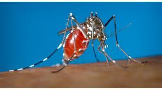 Twitter2月17~20日 米国が蚊にジカウイルスを意図的に混入する可能性を懸念するロシア