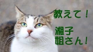 【新コーナー】教えて! 湘子姐さん! 作家・天藤湘子さんに相談してみよう