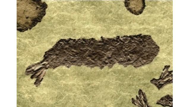 幻の「フライエビ」全身化石見つかる 名古屋