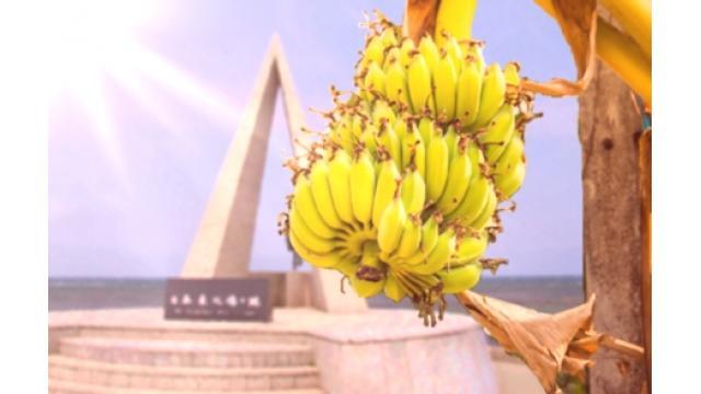 「宗谷バナナ」たわわ 猛暑の中、収穫最盛期 北海道
