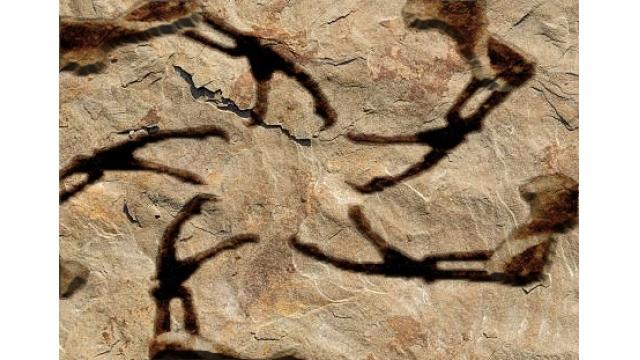 【企画広告】ティラノサウルスの星ピース化石 三宅島で発見