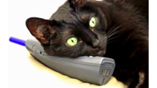 猫騙る不審電話に注意呼びかけ 警視庁