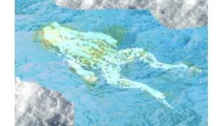 永久凍土から5万年前の仮死カエル見つかる ロシア