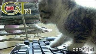CoTri 番外編 「CaTri -猫賛-」 cat.014「OC…それはオフィスキャットw」