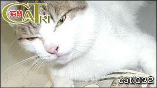 CoTri 番外編 「CaTri -猫賛-」 cat.032「お主も悪よのぉ、猫後屋・・・」