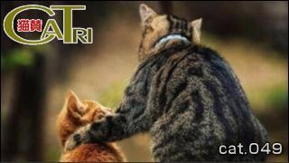 CoTri 番外編 「CaTri -猫賛-」 cat.049「猫の父子愛っ!」