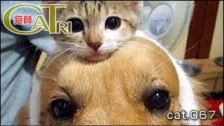 CoTri 番外編 「CaTri -猫賛-」 cat.067「そっくり!」