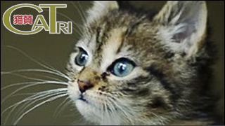 CoTri 番外編 「CaTri -猫賛-」 cat.079「新商品?」